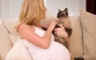 Хронический токсоплазмоз при беременности