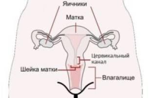Когда нужно идти к гинекологу при беременности?