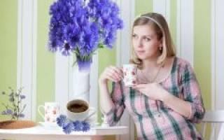 Можно ли пить цикорий во время беременности?